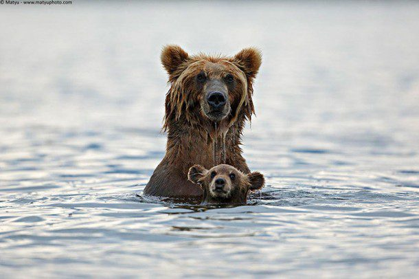 25 stunning photos of parenting in the wild (yes, with fun facts)