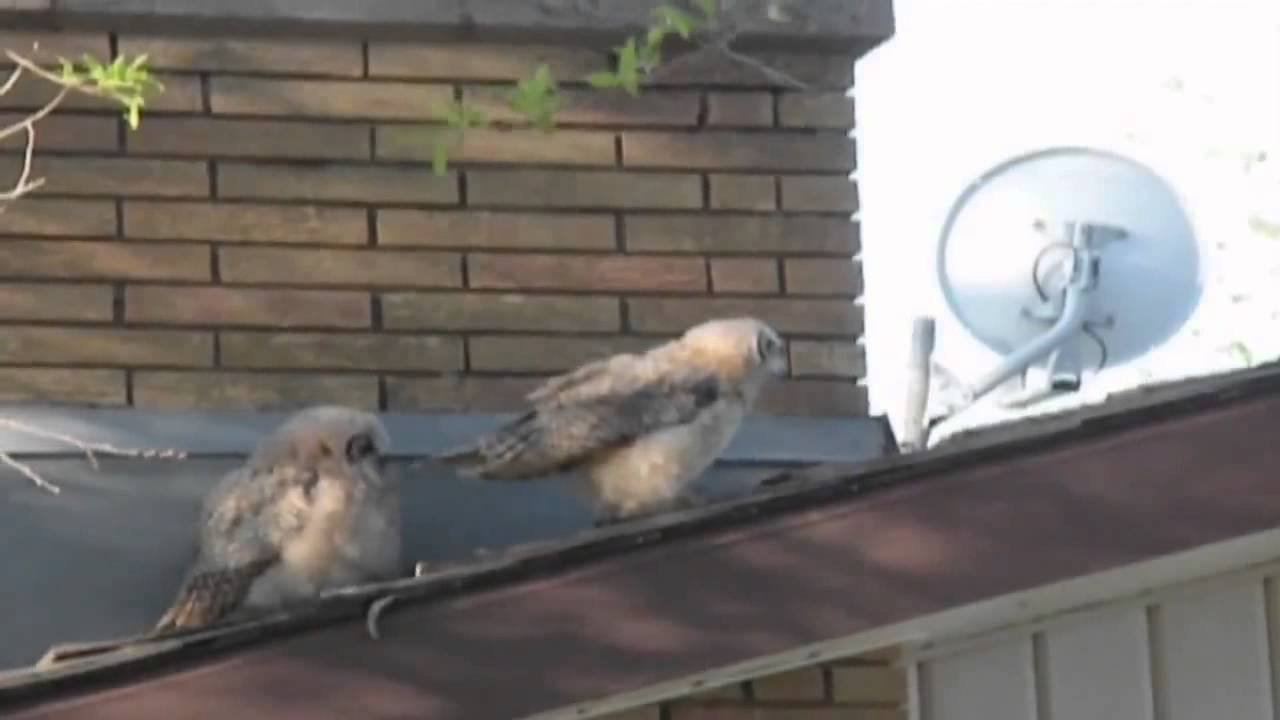 Owl poops on his friend, then does a runner