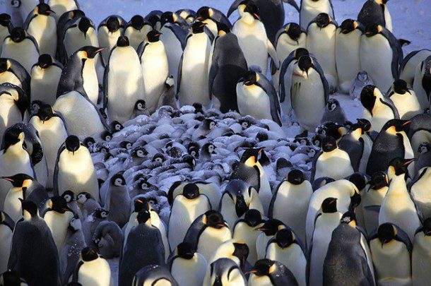 Fun fact: Penguins can dive to depths of 800 feet