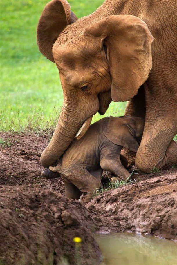 Fun fact: An Elephant's trunk is used to drink, smell, pick up food, touch and communicate