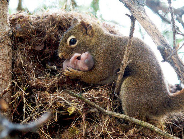 Fun fact: Squirrels don't dig up all of their buried nuts, which results in more trees in the world's forests